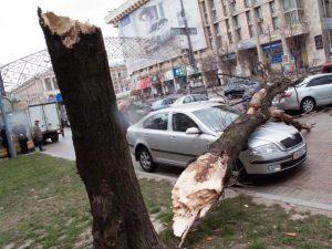 Дерево упало во дворе дома