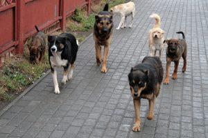 Куда обращаться, если в районе бродячие псы